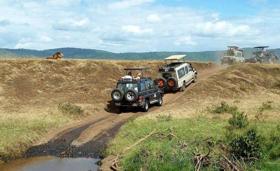 Choosing a Safari Company